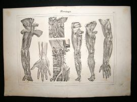 Anatomy Print: 1835 Neurology Nerves, Folio.